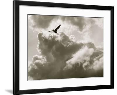 Free as a Bird-Toula Mavridou-Messer-Framed Photographic Print