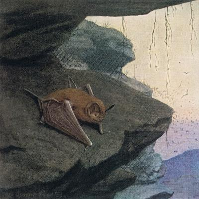 Free Tailed Bat-Louis Agassiz Fuertes-Giclee Print