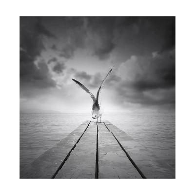 Freedom-ValentinaPhotos-Art Print
