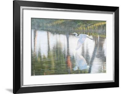 Freedom-Bruce Dumas-Framed Giclee Print