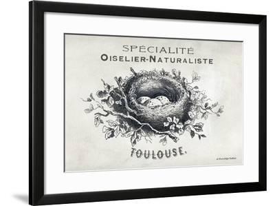 French Bird Nest II-Gwendolyn Babbitt-Framed Art Print