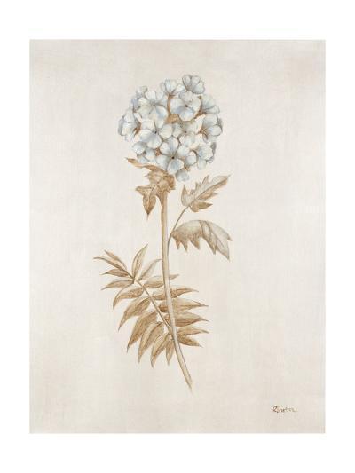 French Botanicals VI-Rikki Drotar-Giclee Print
