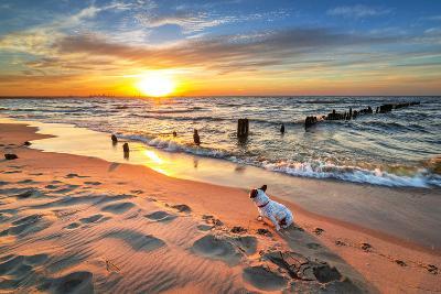 French Bulldog on the Beach at Sunset-Patryk Kosmider-Photographic Print
