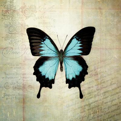 French Butterfly III-Debra Van Swearingen-Art Print