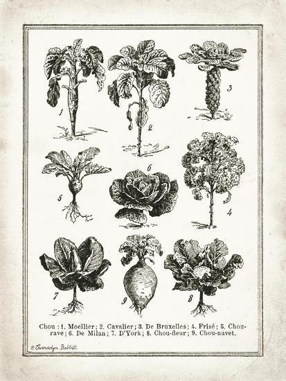 French Cabbage-Gwendolyn Babbitt-Art Print