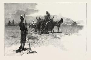 French Canadian Life, Gathering Marsh Hay, Canada, Nineteenth Century