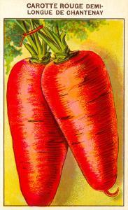 French Carrot Seed Packet