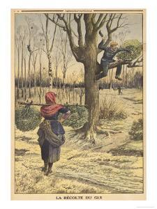 French Countryfolk Harvesting Mistletoe for the Christmas Market
