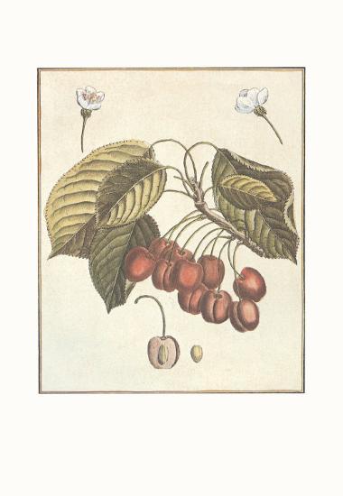 French Fruit Plate, Cherries--Art Print