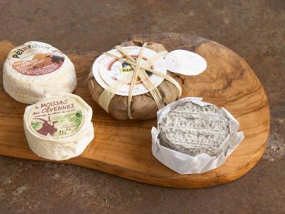 French Goat Cheese, Clos Des Iles, Le Brusc, Cote d'Azur, Var, France-Per Karlsson-Photographic Print
