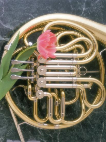 French Horn with a Tulip-Martin Fox-Photographic Print