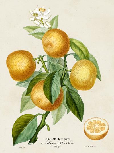 French Orange Botanical III-A^ Risso-Art Print