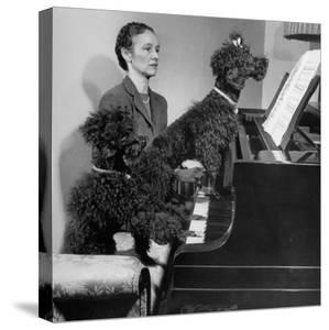 French Poodles Sitting at Piano with Woman