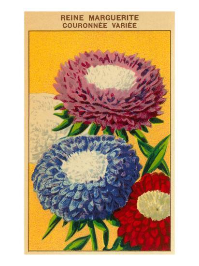 French Reine Marguerite Coronets Seed Packet--Art Print