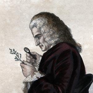 Portrait of Bernard de Jussieu (1699-1777), French naturalist by French School