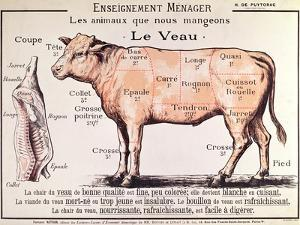Veal: Diagram Depicting the Different Cuts of Meat by French School