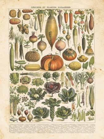 https://imgc.artprintimages.com/img/print/french-vegetable-chart_u-l-q19x61p0.jpg?p=0