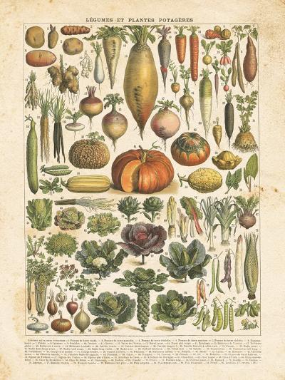 French Vegetable Chart-Gwendolyn Babbitt-Art Print