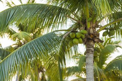 https://imgc.artprintimages.com/img/print/french-west-indies-saint-martin-baie-nettle-palm-tree-morning_u-l-q1dfqho0.jpg?p=0