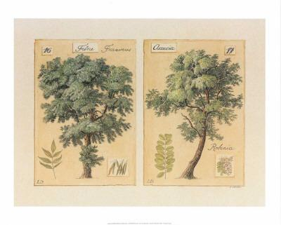 Frêne et Accacia-Laurence David-Art Print