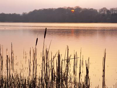 Frensham Great Pond at Sunset with Reeds in Foreground, Frensham, Surrey, England-Pearl Bucknell-Photographic Print