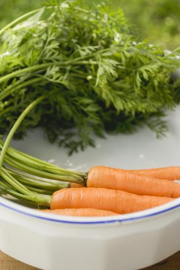 Fresh Carrots with Tops in White Dish-Foodcollection-Photographic Print