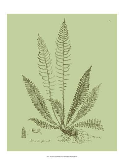 Fresh Ferns I-Samuel Curtis-Art Print