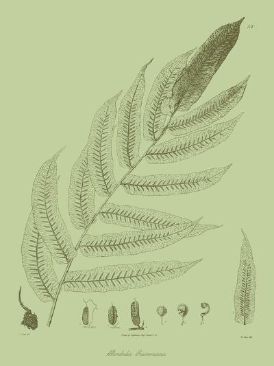 Fresh Ferns III-Samuel Curtis-Art Print