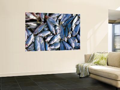 Fresh Fish for Sale on Ferry Dock Near Gallata Bridge-Dallas Stribley-Giant Art Print