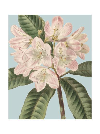 Fresh Florals II-Vision Studio-Art Print
