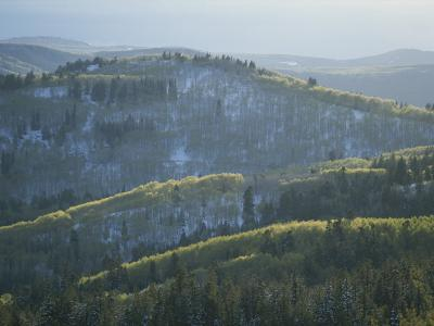 Fresh Green Aspen Trees on Snowy Slopes in the Wasatch Range, Utah-James P^ Blair-Photographic Print