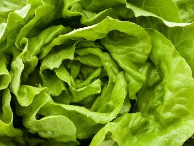 Fresh Lettuce-Greg Elms-Photographic Print