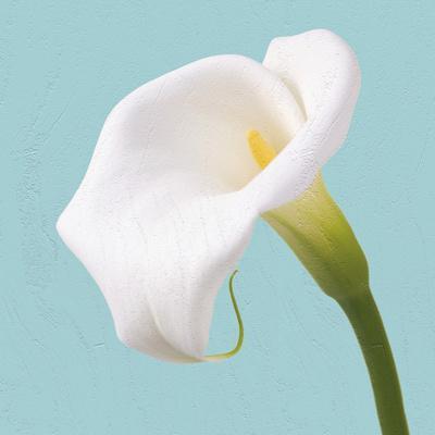 Fresh Lily I-Adam Brock-Framed Giclee Print
