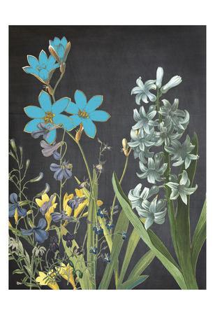 Fresh Meadow Bloom-Sheldon Lewis-Framed Art Print