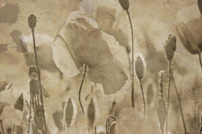 https://imgc.artprintimages.com/img/print/fresh-meadow-bloom_u-l-q1g7hsr0.jpg?p=0