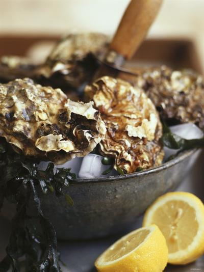 Fresh Oysters and Lemon-Debi Treloar-Photographic Print