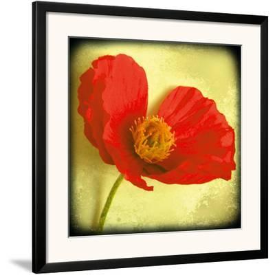 Fresh Poppies I-Rossana Novella-Framed Giclee Print