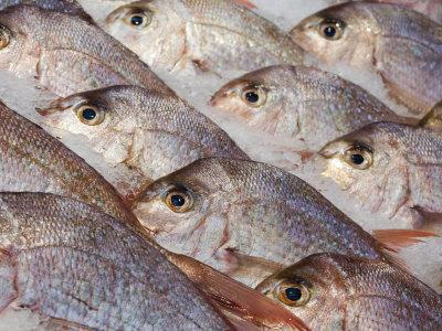 https://imgc.artprintimages.com/img/print/fresh-seafood-sits-on-ice-ready-at-sydney-s-fish-market-at-pyrmont-australia_u-l-p8yyqr0.jpg?p=0