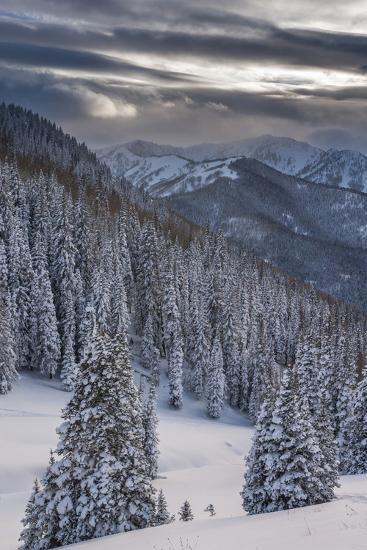Fresh Snow in Evergreens, Wasatch Mountains, Uinta-Wasatch-Cache, Utah-Howie Garber-Photographic Print