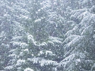 https://imgc.artprintimages.com/img/print/fresh-snow-on-evergreen-trees_u-l-q1gb71o0.jpg?p=0