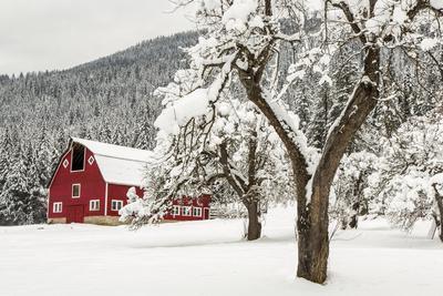 Fresh Snow on Red Barn Near Salmo, British Columbia, Canada-Chuck Haney-Premium Photographic Print