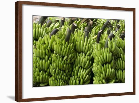 Freshly Cut Bananas, Peru, South America-Peter Groenendijk-Framed Photographic Print