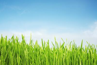 Freshly Watered Grassy Field-Nicholas Monu-Photographic Print
