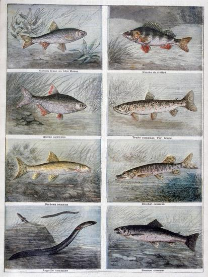 Freshwater Fish, 1897-F Meaulle-Giclee Print