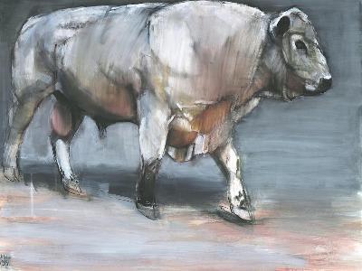 Fresno, Galloway Bull-Mark Adlington-Giclee Print
