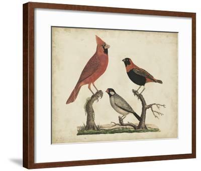 Cardinal & Grosbeak