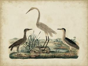 Great White Heron and Night Heron by Friedrich Strack