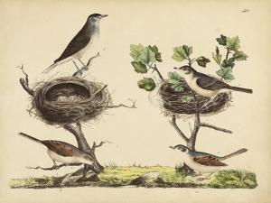 Wrens, Warblers and Nests I by Friedrich Strack