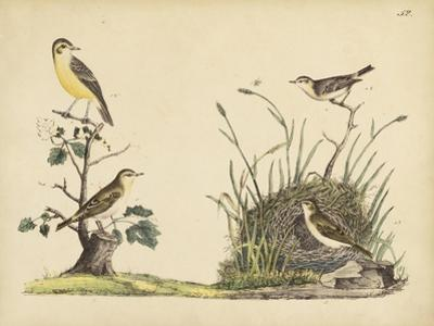 Wrens, Warblers and Nests II