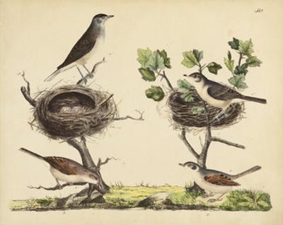 Wrens, Warblers & Nests I